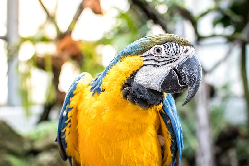 Pomozte s námi papouškům z Laguny - Foto 1