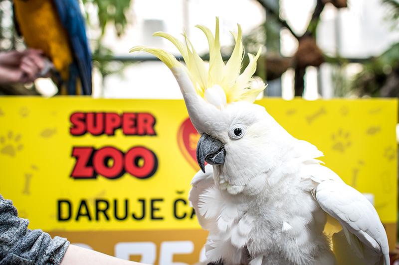 Pomozte s námi papouškům z Laguny - Foto 2