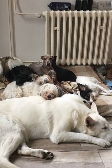 Spolek Psi pomáhají - Foto 1