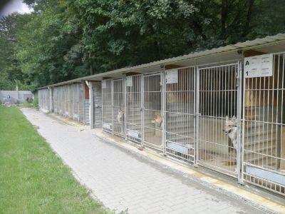 Záchranná stanice pro českolovenské vlčáky - Foto 3